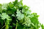 Cilantro For Your Health