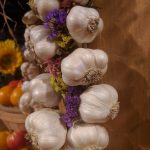 Garlic: A Quick Guide