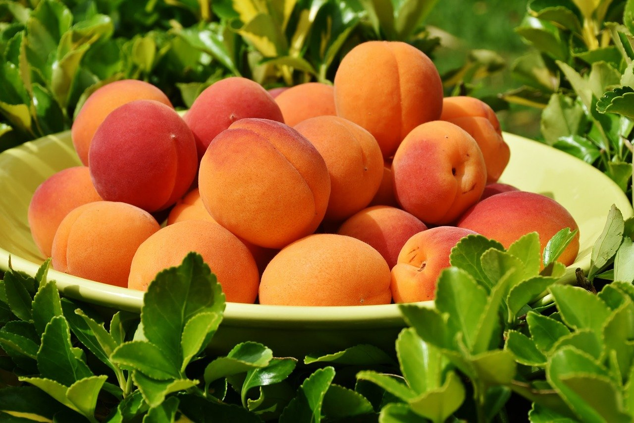 Peaches A Sweet Taste of Sunshine