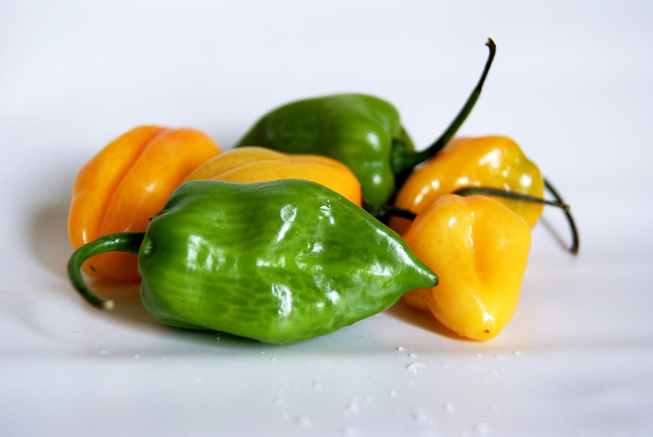 The Habanero Chile