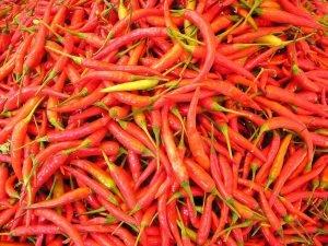Hot Serrano Chiles